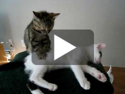 Massage de chat